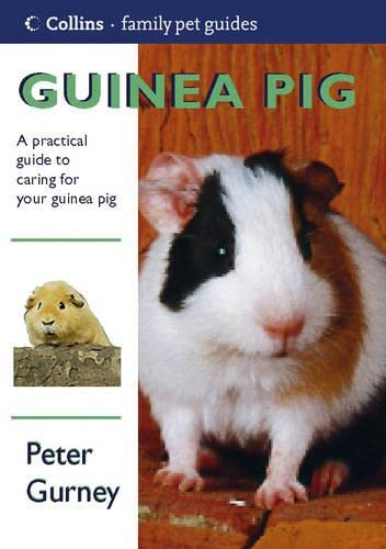 Guinea Pig By Peter Gurney