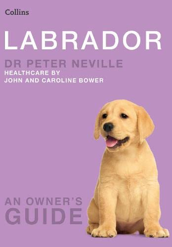 Labrador By Peter Neville