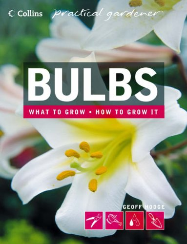 Bulbs By Geoff Hodge