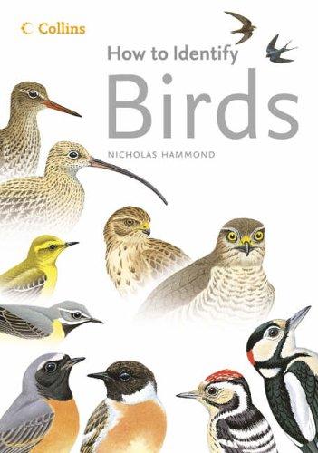 How to Identify Birds By Nicholas Hammond