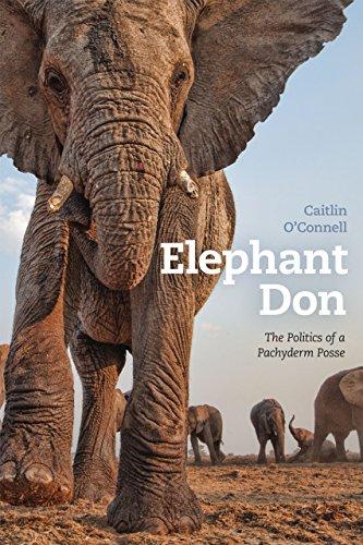 Elephant Don par Caitlin O'Connell