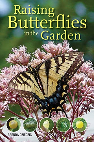 Raising Butterflies in the Garden By Brenda Dziedzic