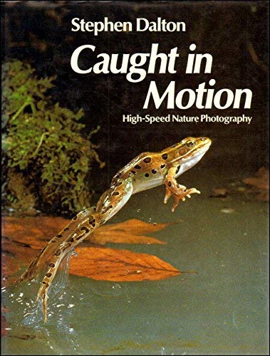 Caught in Motion By Stephen Dalton
