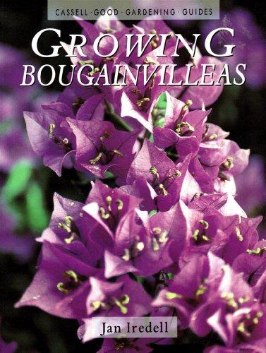 Growing Bougainvilleas By Jan Ireldell