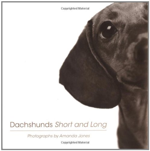 Dachshunds Short And Long By Amanda Jones