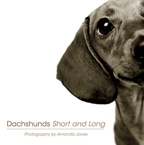 Dachshunds Short And Long By Amanda Jones