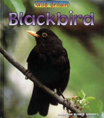 Wild Britain: Blackbird Hardback By Louise Spilsbury