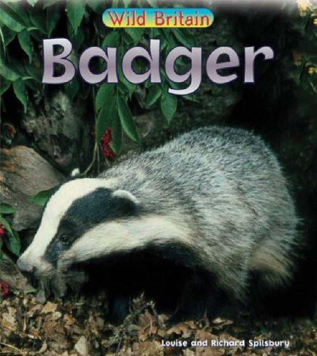 Wild Britain: Badger Paperback By Richard Spilsbury