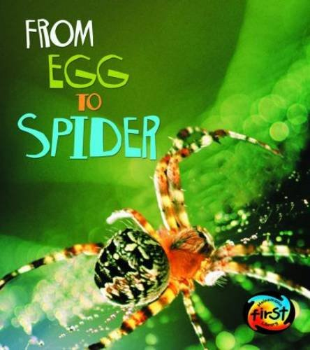 From Egg to Spider By Anita Ganeri