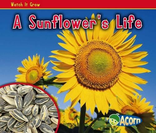 A Sunflower's Life By Nancy Dickmann