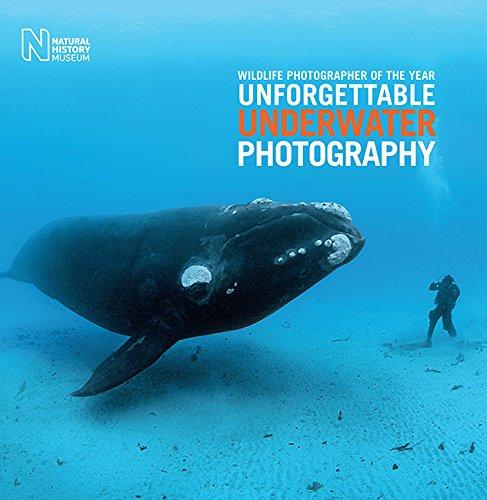 Wildlife Photographer of the Year: Unforgettable Underwater Photography By Rosamund Kidman Cox
