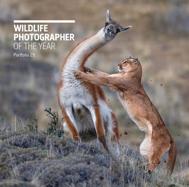 Wildlife Photographer of the Year: Portfolio 29 By Rosamund Kidman Cox