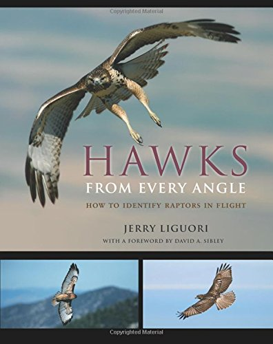 Hawks from Every Angle: How to Identify Raptors in Flight by Jerry Liguori
