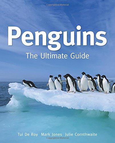 Penguins By Tui De Roy