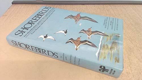 Shore Birds By Peter Hayman