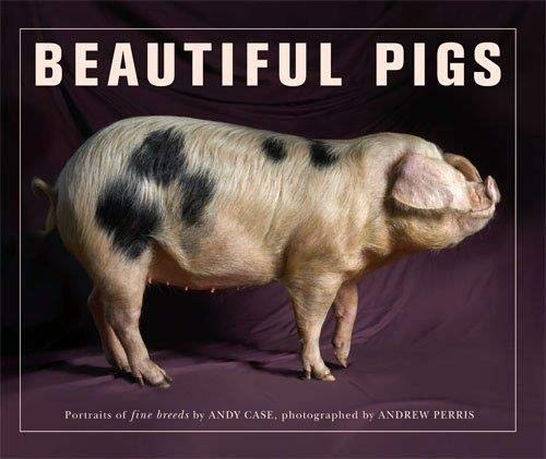 Beautiful Pigs by Andy Case