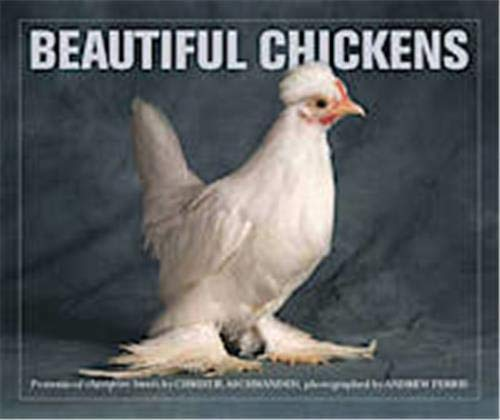 Beautiful Chickens By Christie Aschwanden