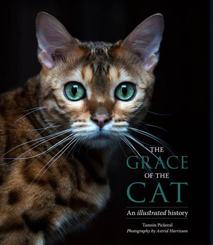 The The Grace of the Cat By Tamsin Pickeral