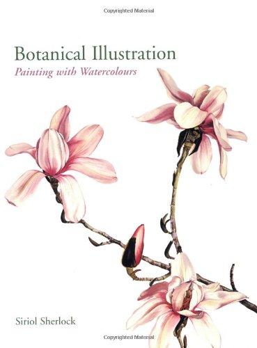 Botanical Illustration By Siriol Sherlock