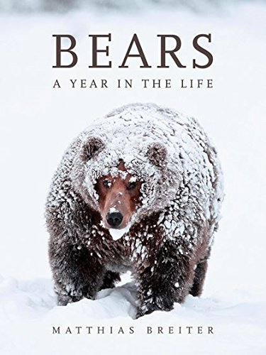 Bears: A Year in the Life by Matthias Breiter