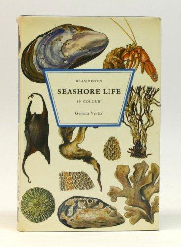Seashore Life By Gwynne Vevers