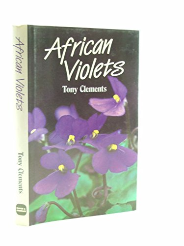 African Violets By Tony Clements