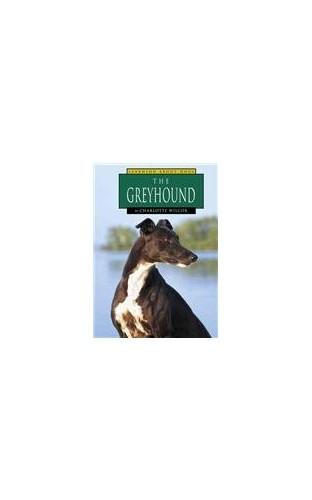 The Greyhound By Charlotte Wilcox