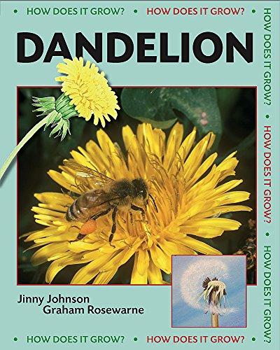 Dandelion By Jinny Johnson