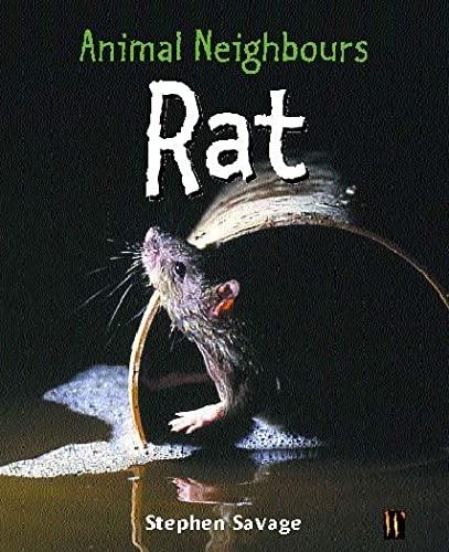 Animal Neighbours: Animal Neighbours: Rat By Stephen Savage