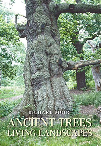 Ancient Trees By Richard Muir