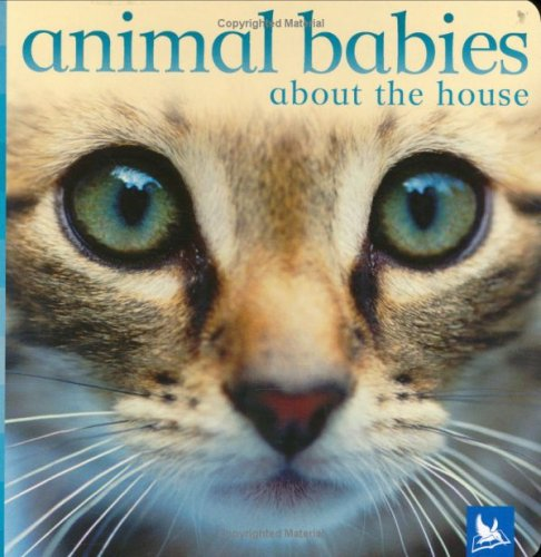 Animal Babies About the House by Vicky Weber