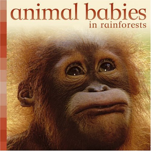 Animal Babies in Rainforests by