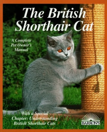The British Short Hair Cat By F. Lessmeier