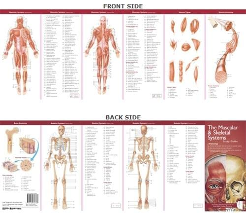 Anatomical Chart Company's Illustrated Pocket Anatomy: The Muscular & Skeletal Systems Study Guide By Prepared for publication by Anatomical Chart Company
