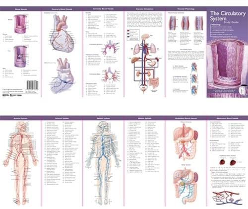 Anatomical Chart Company's Illustrated Pocket Anatomy: The Circulatory System Study Guide by Anatomical Chart Company