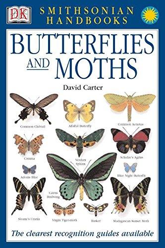 Handbooks: Butterflies & Moths By David Carter