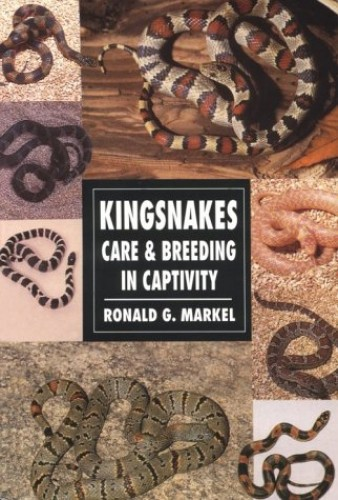 Kingsnakes Care And Breeding In Captivity By Ronald G