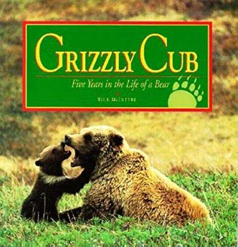 Grizzly Cub By Rick McIntyre