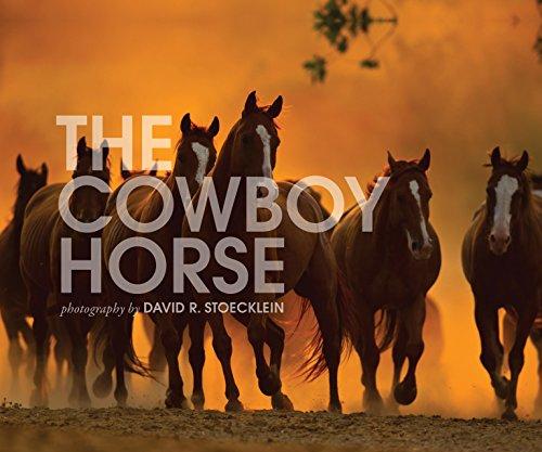 Cowboy Horse By David R. Stoecklein