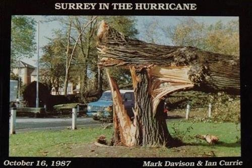 Surrey in the Hurricane: Great Storm of October 16th 1987 1987 (Great Storm of 1987 in Southern England) By Mark Davison