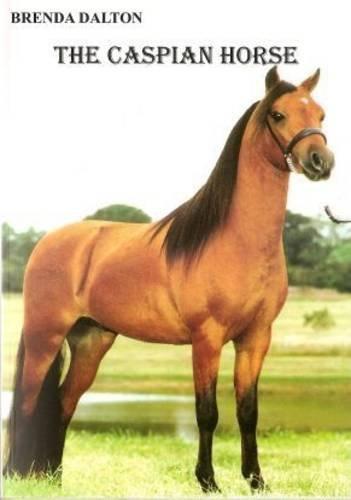 The Caspian Horse By Brenda Dalton
