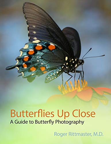 Butterflies Up Close By Roger Rittmaster