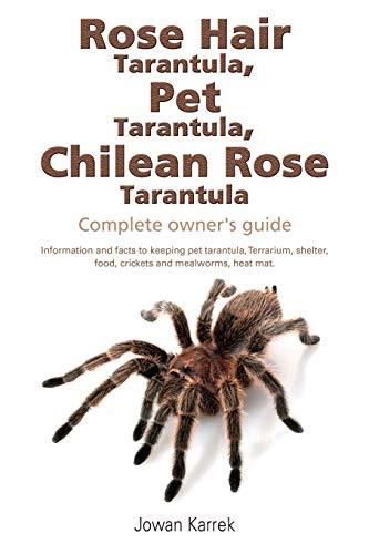Rose Hair Tarantula, Pet Tarantula, Chilean Rose Tarantula By Jowan Karrek