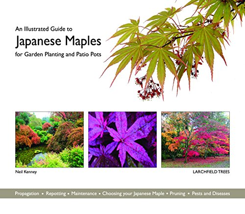 An Illustrated Guide to Japanese Maples for Garden Planting and Patio Pots By Neil Kenney