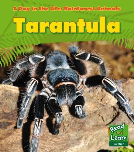 Tarantula-A-Day-in-the-Life-Rainforest-Animals-by-Ganeri-Anita-1406218820
