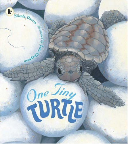 One Tiny Turtle (Nature Storybooks) By Nicola Davies