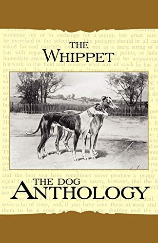 The Whippet - A Dog Anthology (A Vintage Dog Books Breed Classic) By Various ( the Federation of Children's Book Groups)