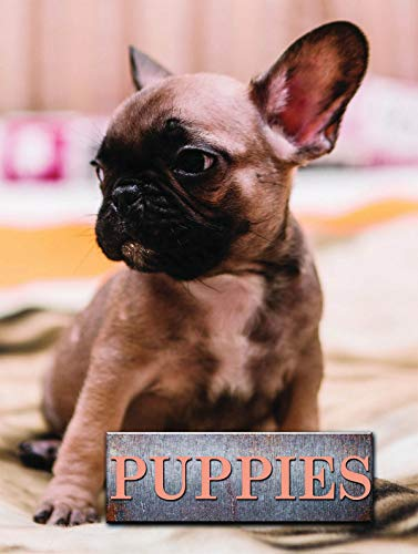Puppies By Marcus Schneck