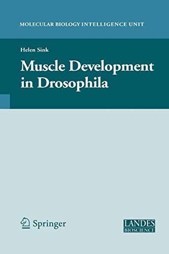 Muscle Development in Drosophilia By Helen Sink