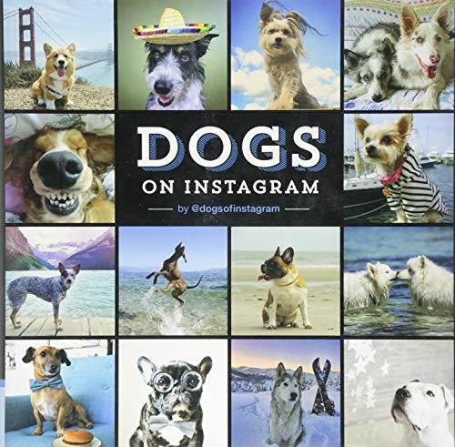 Dogs On Instagram By @dogsofinstagram